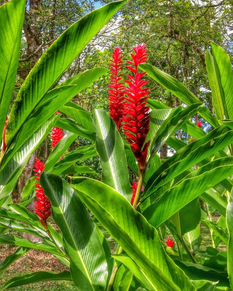 Costa Rica foliage