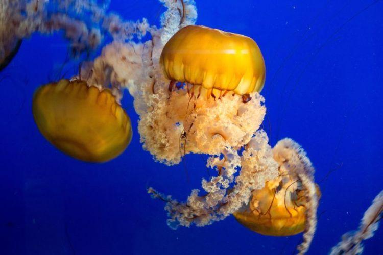 Jellies at the Vancouver Aquarium