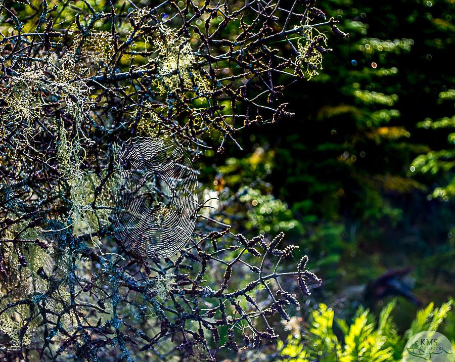 Newfoundland spider webs