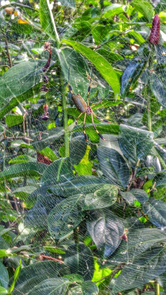 spider in Cahuita National Park