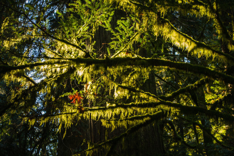 light in Cathedral Grove